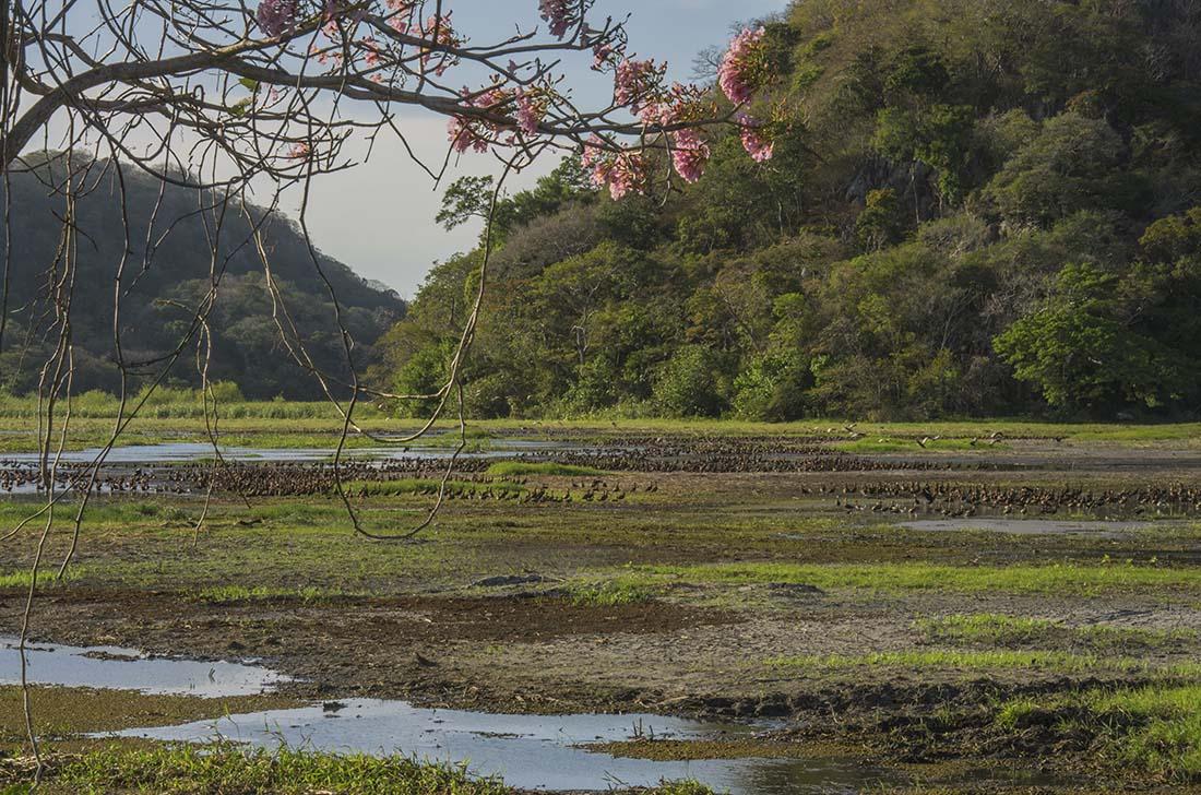 Parque Nacional Palo Verde