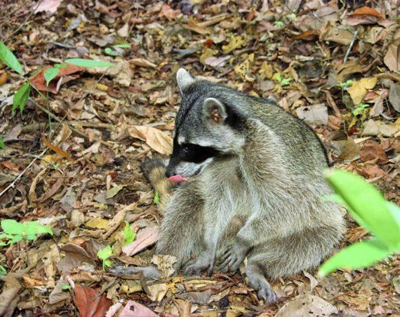 Parque Nacional Diriá